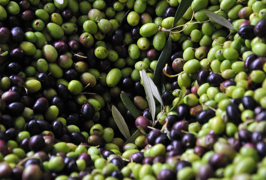 Olives Umbria