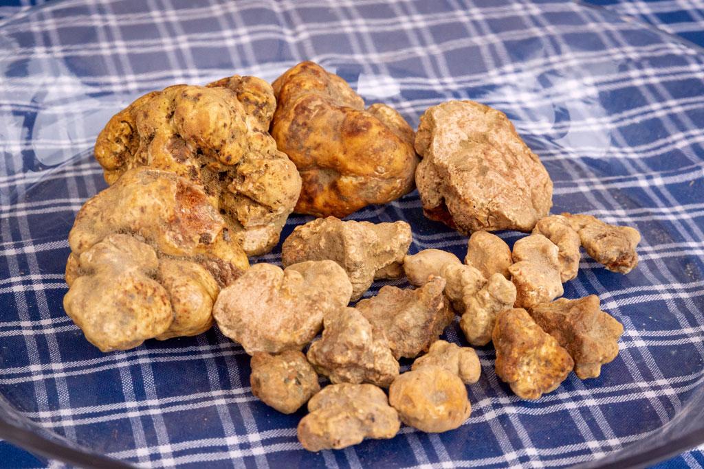 White truffle San Miniato