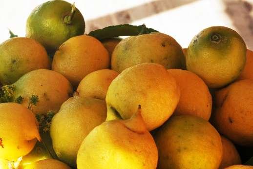 Isola Rossa - Fresh lemons grow in the garden!