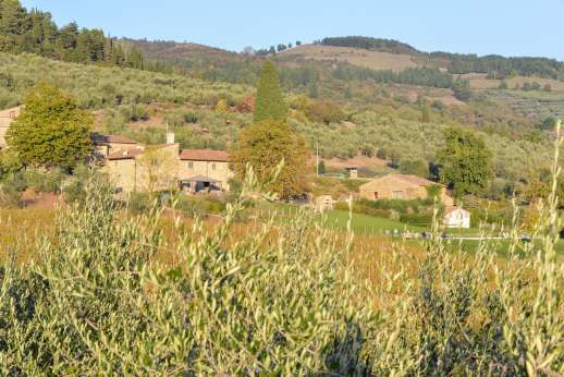 The Estate Of Petroio - Villa Il Borgo seen through the olive grove