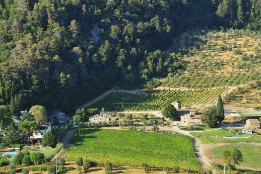Staffed weddings at The Estate of Petroio - The Villa of Petroio is the white building left, and Il Borgo is to the right of the image below the vineyard.