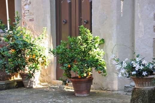 Fonte Petrini - The large beautiful courtyard