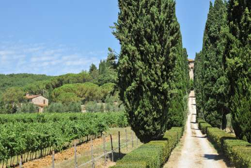 Fonte Petrini - The long drive leading up to the property passing vineyards and cypress trees on the way