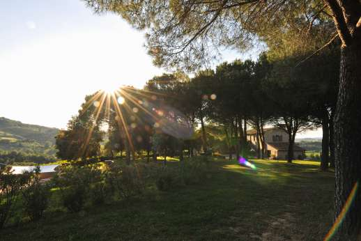 Villa Ostignano - A pretty garden with extensive lawns all around the villa with great view on olives groves and vineyards.
