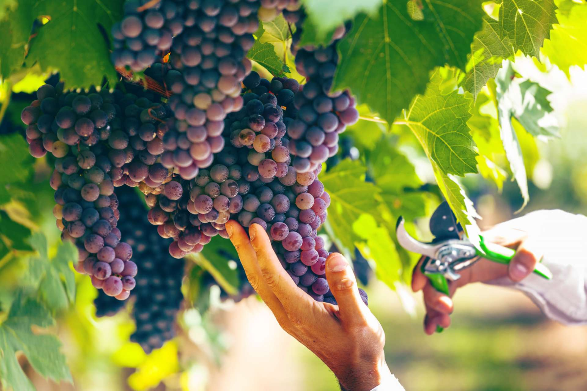 Why is Tuscan wine so special?