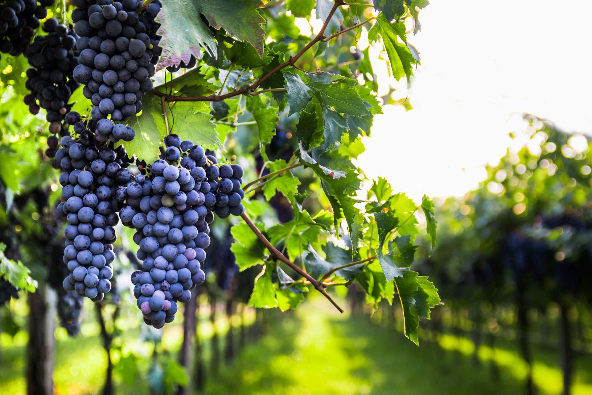 A Beginners Guide to Chianti Wine: Part 1