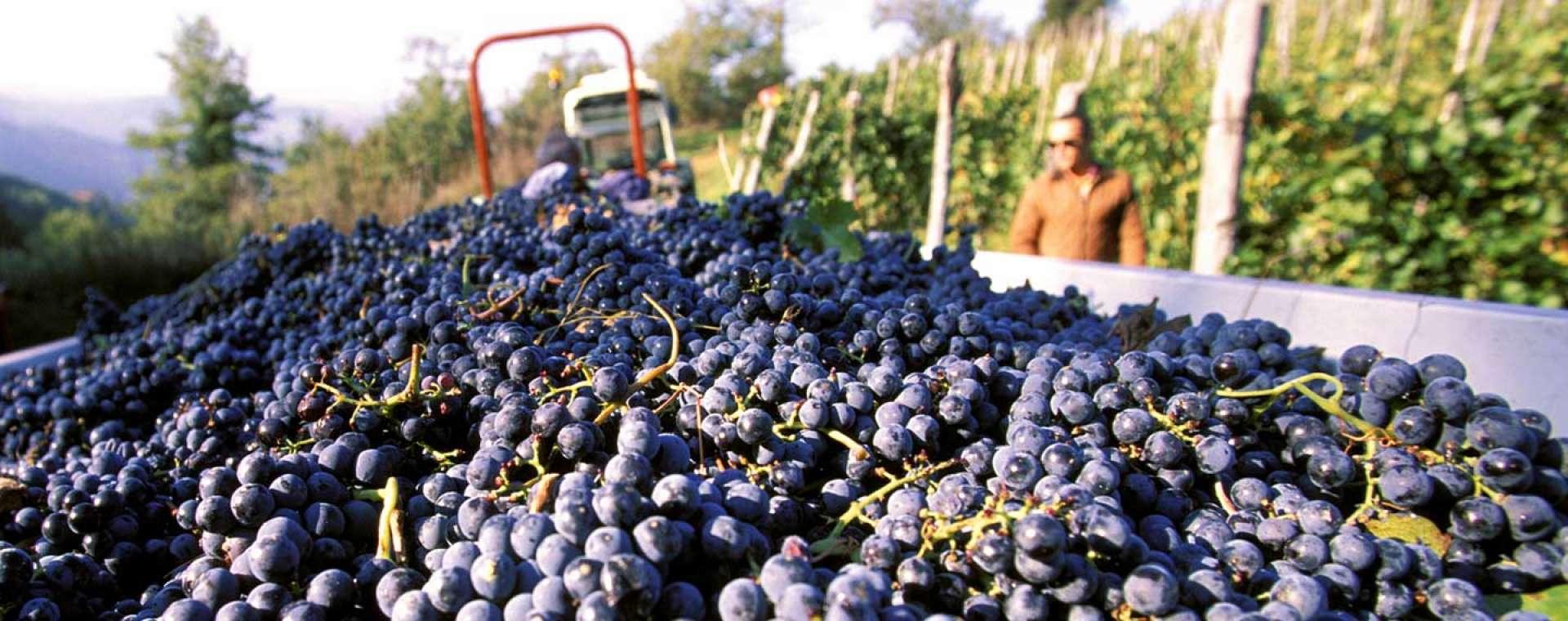 Chianti's Famous Wine