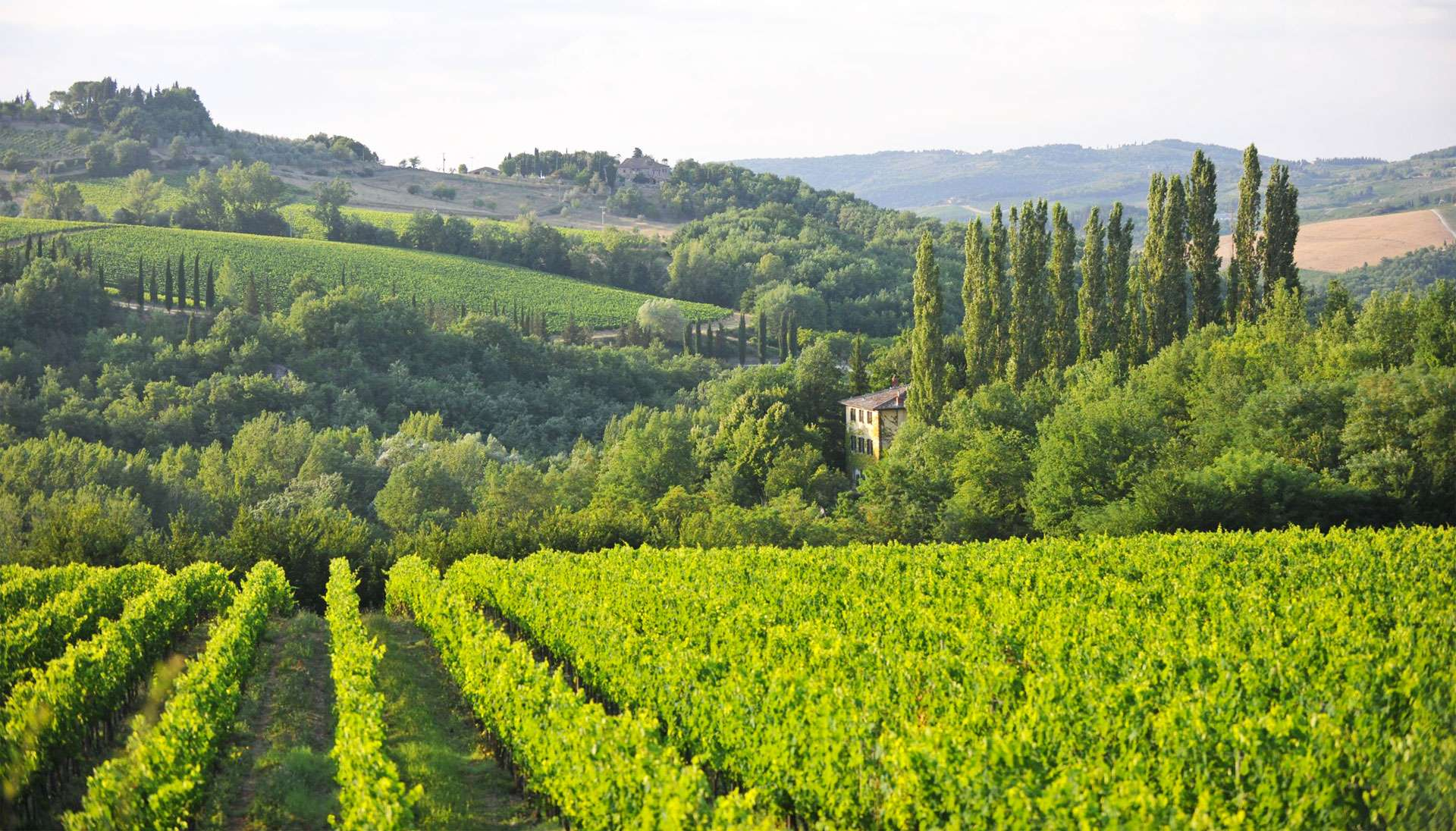 Introduction to Chianti